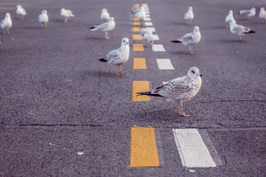 Street. Animals. Birds. Doves. An image from https://www.pexels.com.